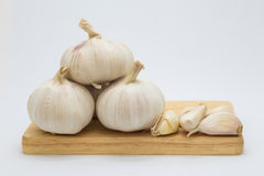 Root garlic on wooden board Stock Photography