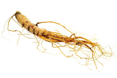 The root of ginseng. Food  ingredients -  the root of ginseng,  isolated over white background Royalty Free Stock Images