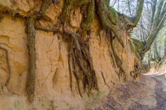 Root gorge near Kazimierz Dolny. Root gorge near Kazimierz Dolny in Poland Royalty Free Stock Photography