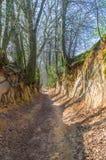 Root gorge near Kazimierz Dolny. Root gorge near Kazimierz Dolny in Poland Stock Photography