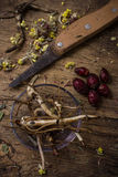 Root of healing herbs Stock Images