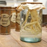 Root in jar. Ginger root in covered glass jar Royalty Free Stock Image