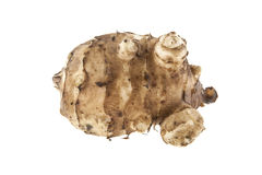Root of Jerusalem artichoke isolated on white Stock Photography