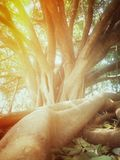Root and leaves Royalty Free Stock Images