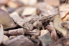Root for Mamajuana, caribbean aphrodisiac. Macro stock photography