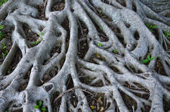Root network Stock Images