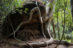 Root overgrowth - Cambodia Royalty Free Stock Image