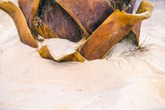 The root of the palm tree in the sand. Light sand, clean sea water.  royalty free stock photography