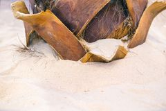 The root of the palm tree in the sand. Light sand, clean sea water.  stock images