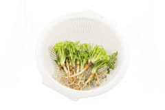 Root of Parsley in a basket Royalty Free Stock Photo