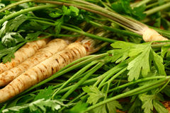 Root Parsley roots on its leaves Stock Images