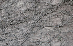 Root photo detail Royalty Free Stock Images