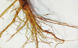 Root Stock Photography