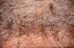 Root of plant system in the underground soil Stock Photo