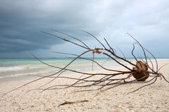 Root at the sandy beach closeup. Stunning view to the ocean Royalty Free Stock Images