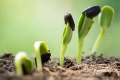 Root seed on soil spring season Stock Photo