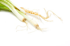 Root Of Spring Onion And Coriander. Stock Photography