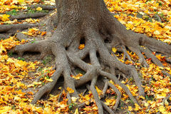 Root system Stock Photo