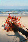 Root of a tree. On the shore of the sea - the storm Stock Photo
