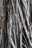 Root tree Stock Image