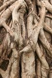 Root tree Stock Photos