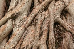Root tree Stock Image