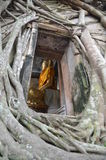 Root of the tree absorbing the ruins Wat Bang Kung Stock Photo
