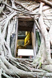 Root of the tree absorbing the ruins Wat Bang Kung. Within the temple,Temple in Thailand Royalty Free Stock Photography