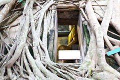 Root of the tree absorbing the ruins Wat Bang Kung Stock Images