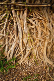 Root tree abstract Stock Photography