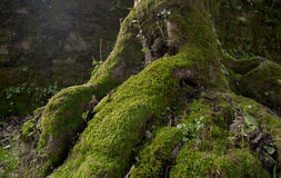 Root tree Stock Images