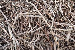 Root Stock Image