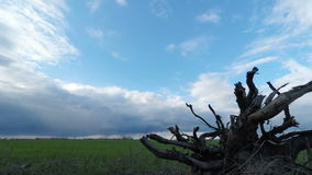 Root of a Tree and Clouds Sweep Over the Green Field. The Dried Root of a Tree on a Background of Clouds Sweep Over Green Field Before Rain. Timelapse stock video