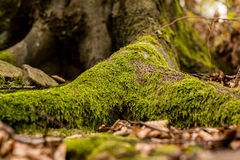 Root of tree Stock Photos