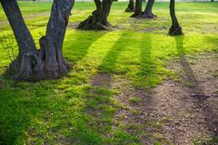 The root of the tree in the green grass. Stock Images