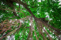 Root of tree. Hanging from above Stock Image