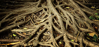 Root of tree Stock Photo