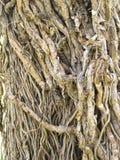Root tree Stock Photo