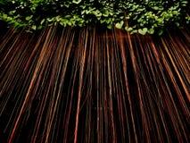 Root tree Stock Photography