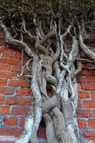 Root of the tree. The roots of the tree were for a Royalty Free Stock Photo