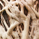 Root of the tree Stock Photo