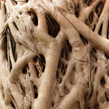 Root of the tree. The roots of the tree were for a long time Royalty Free Stock Photo