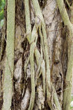 Root of the tree Royalty Free Stock Photography