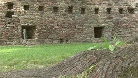 Root of a tree, stone wall background. Slider dolly shot. Ruins Czech republic Dalecin stock video