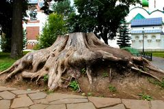 The root of the tree royalty free stock photography