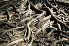 The root. Of trees represents a solid foundation stock photos