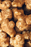 Root tuber Stock Photo
