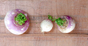 Root vegetable. On wood background Royalty Free Stock Images