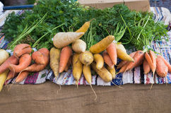 Root vegetables Stock Photography