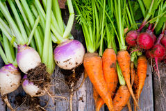 Root Vegetables Royalty Free Stock Images